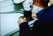 Person doing micromanipulation