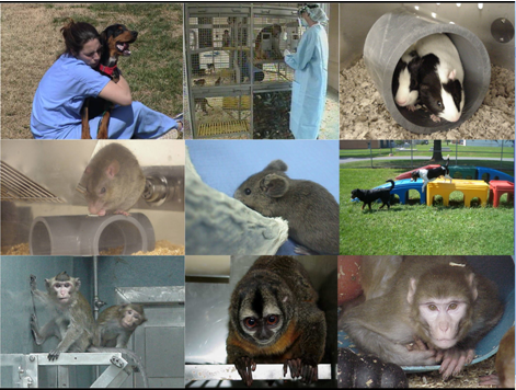 Collage of species housed at DVR, including dogs, NHP, guinea pigs, rats, and mice