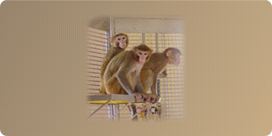 Montage of Monkeys